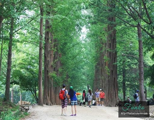 Nami Island & Railbike & Garden of Morning Calm Shuttle Package_2