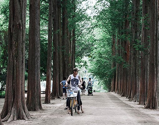 Nami Island & Railbike & Garden of Morning Calm Shuttle Package
