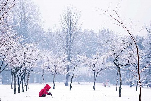 [Dec 1-May 31] Nami Island & Petite France & Strawberry Picking Shuttle Package_15