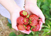 [Dec 1-May 31] Nami Island & Petite France & Strawberry Picking Shuttle Package_thumb_5