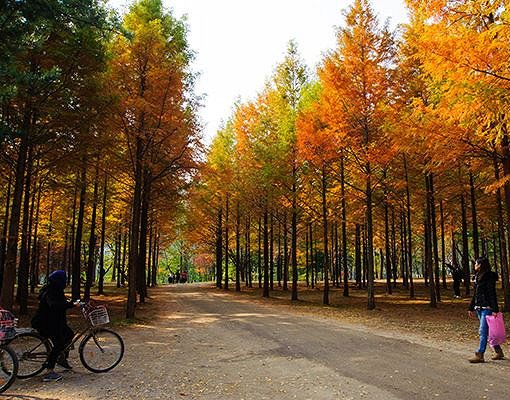 Nami Island & Petite France Shuttle Bus Package_8