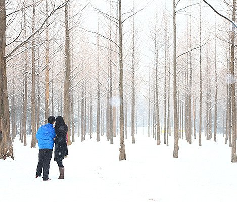 [Dec 1 - Feb 28] Nami Island & Elysian Gangchon Ski Resort Shuttle Bus Package_13
