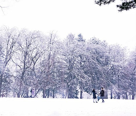 [Dec 1 - Feb 28] Nami Island & Elysian Gangchon Ski Resort Shuttle Bus Package_3