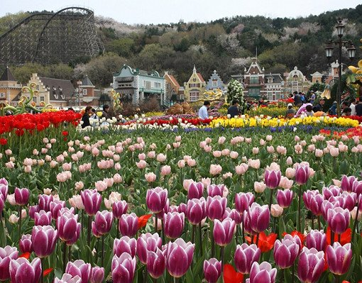 Everland Discount Ticket_11