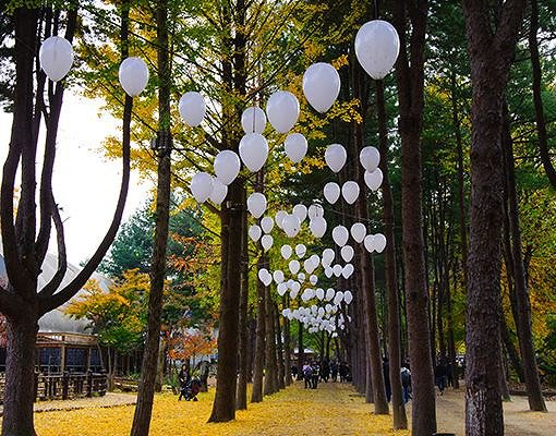 Nami Island Shuttle Bus & Admission Ticket