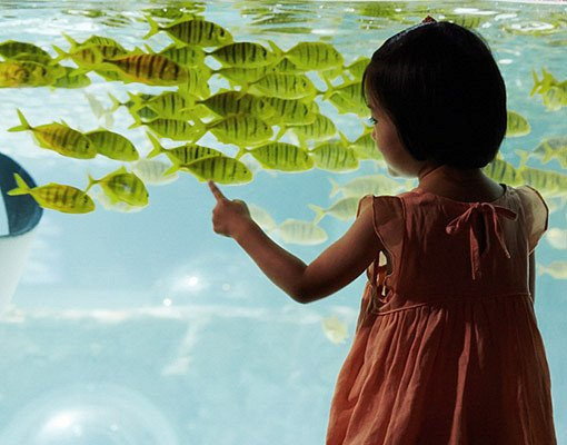 Busan Sea Life Aquarium Discount Ticket