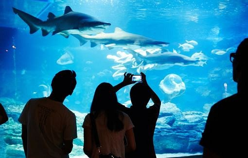 Busan Sea Life Aquarium Discount Ticket_8