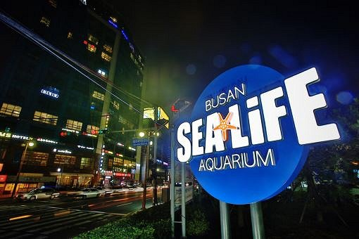 Busan Sea Life Aquarium Discount Ticket_10
