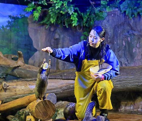 Busan Sea Life Aquarium Discount Ticket_4