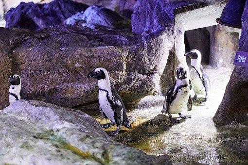 Busan Sea Life Aquarium Discount Ticket_24