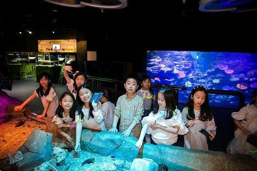 Busan Sea Life Aquarium Discount Ticket_26