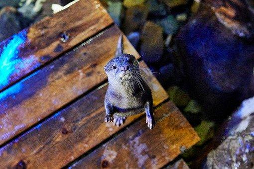 Busan Sea Life Aquarium Discount Ticket_22