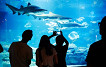 Busan Sea Life Aquarium Discount Ticket_thumb_8