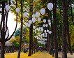 Nami Island & Petite France & Garden of Morning Calm Shuttle Package_thumb_7