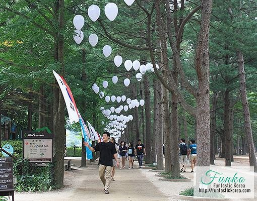 4 In A Day! Petite France & Nami Island & Rail Bike & Garden of Morning Calm Package_7