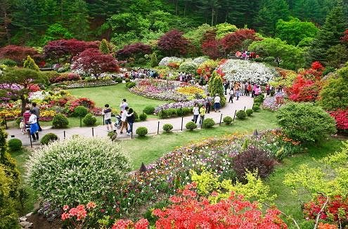 4 In A Day! Petite France & Nami Island & Rail Bike & Garden of Morning Calm Package_14