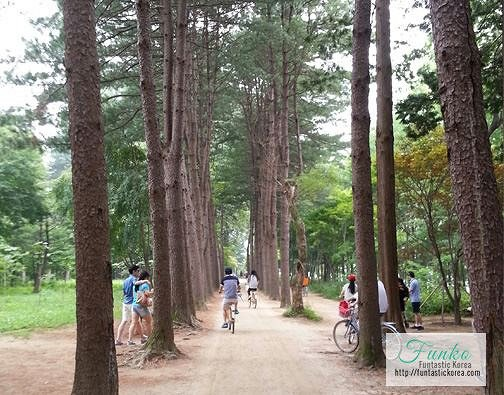 4 In A Day! Petite France & Nami Island & Rail Bike & Garden of Morning Calm Package_8