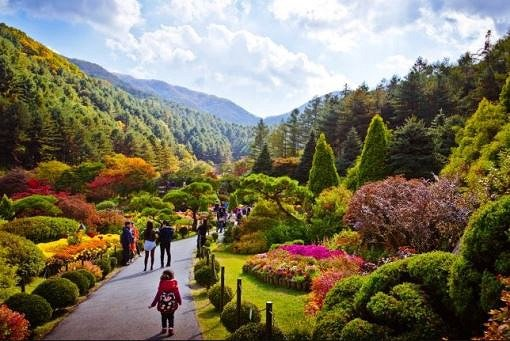 4 In A Day! Petite France & Nami Island & Rail Bike & Garden of Morning Calm Package_15