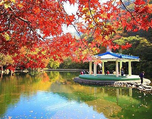 [Oct 27-Nov 17] Naejangsan Autumn Foliage & Jeonju Hanok Village One Day Tour