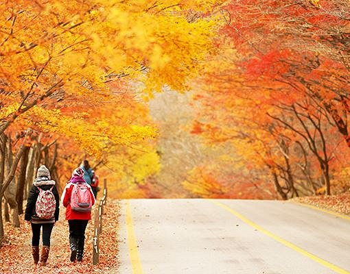 [Nov 1-Nov 15] Naejangsan Mountain Autumn Foliage Shuttle Bus One Day Tour