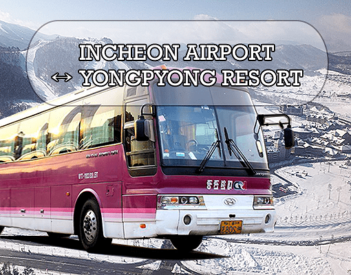 [Purple Bus] Incheon Airport to/from Yongpyong Resort Shuttle Bus