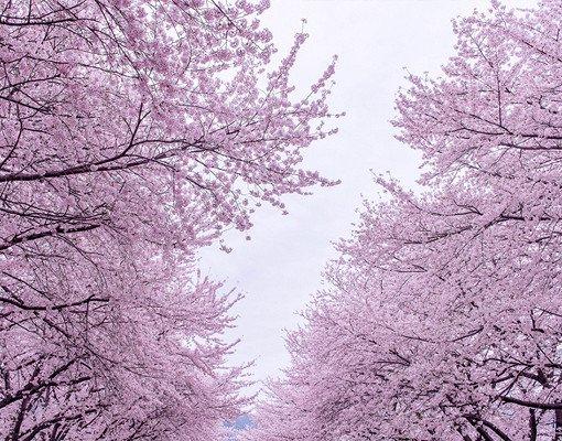 2018 Jinhae Cherry Blossom Festival One Day Shuttle Bus Tour_3