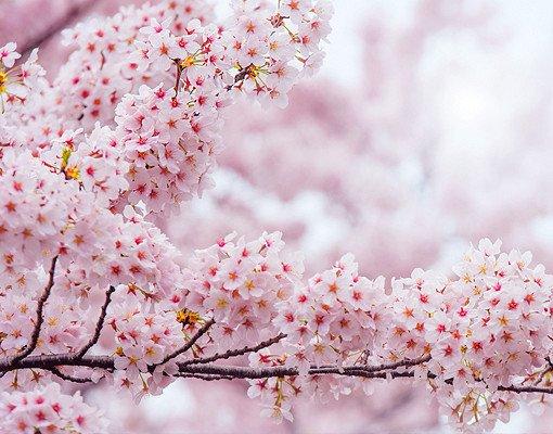 2018 Jinhae Cherry Blossom Festival One Day Shuttle Bus Tour_5