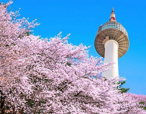 2018 Jinhae Cherry Blossom Festival One Day Shuttle Bus Tour_2