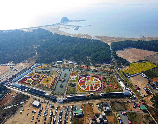 Taean Tulip Festival and Strawberry picking_5
