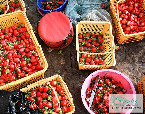 Taean Tulip Festival and Strawberry picking_2