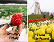 Taean Tulip Festival and Strawberry picking_thumb_0
