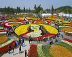 Taean Tulip Festival and Strawberry picking_thumb_9