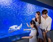 Hanwha Aqua Planet 63 & 63 Sky Art Observatory Discount Ticket_thumb_4
