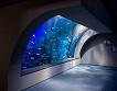 Hanwha Aqua Planet 63 & 63 Sky Art Observatory Discount Ticket_thumb_5