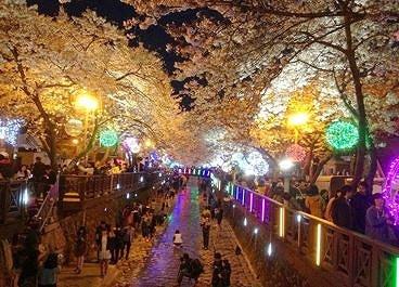 2018 1N2D Busan and Jinhae Cherry Blossom Festival Tour_14