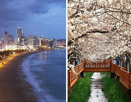 2018 1N2D Busan and Jinhae Cherry Blossom Festival Tour
