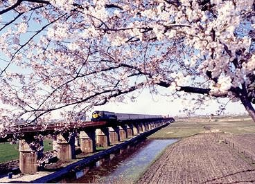 2018 1N2D Busan and Jinhae Cherry Blossom Festival Tour_15