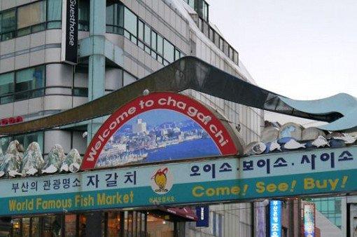 2018 1N2D Busan and Jinhae Cherry Blossom Festival Tour_6
