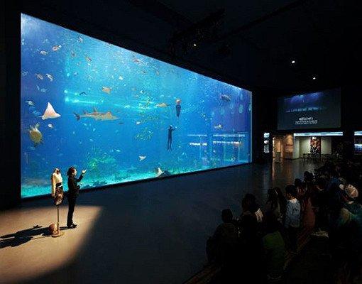 Jeju Aqua Planet Discount Ticket_4