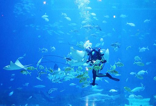 Jeju Aqua Planet Discount Ticket_6