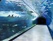 Jeju Aqua Planet Discount Ticket_thumb_7