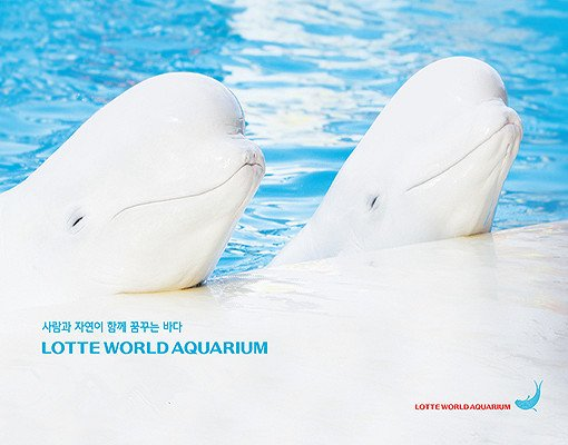 Lotte World and Lotte World Aquarium Discount Ticket_7