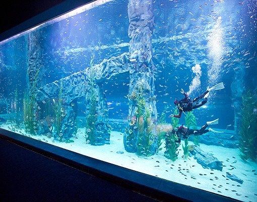 Lotte World and Lotte World Aquarium Discount Ticket_8