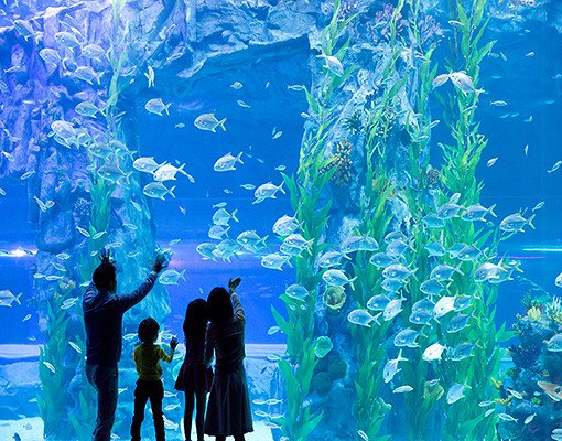 Lotte World and Lotte World Aquarium Discount Ticket
