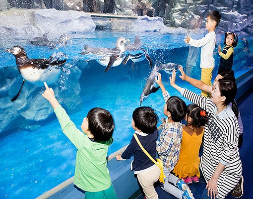 Lotte World and Lotte World Aquarium Discount Ticket_1
