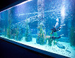 Lotte World and Lotte World Aquarium Discount Ticket_thumb_8