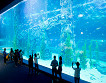Lotte World and Lotte World Aquarium Discount Ticket_thumb_4