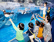 Lotte World and Lotte World Aquarium Discount Ticket_thumb_1