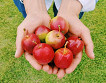 [Sep 2 - Nov 4] Pocheon Art Valley, Mini Apple Picking and Herb island One Day Tour_thumb_0