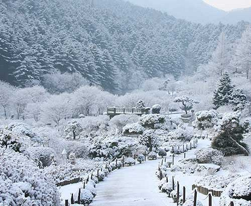 [Dec 7-Mar 24] Nami Island & Petite France & Garden of Morning Calm Shuttle One day Tour_2